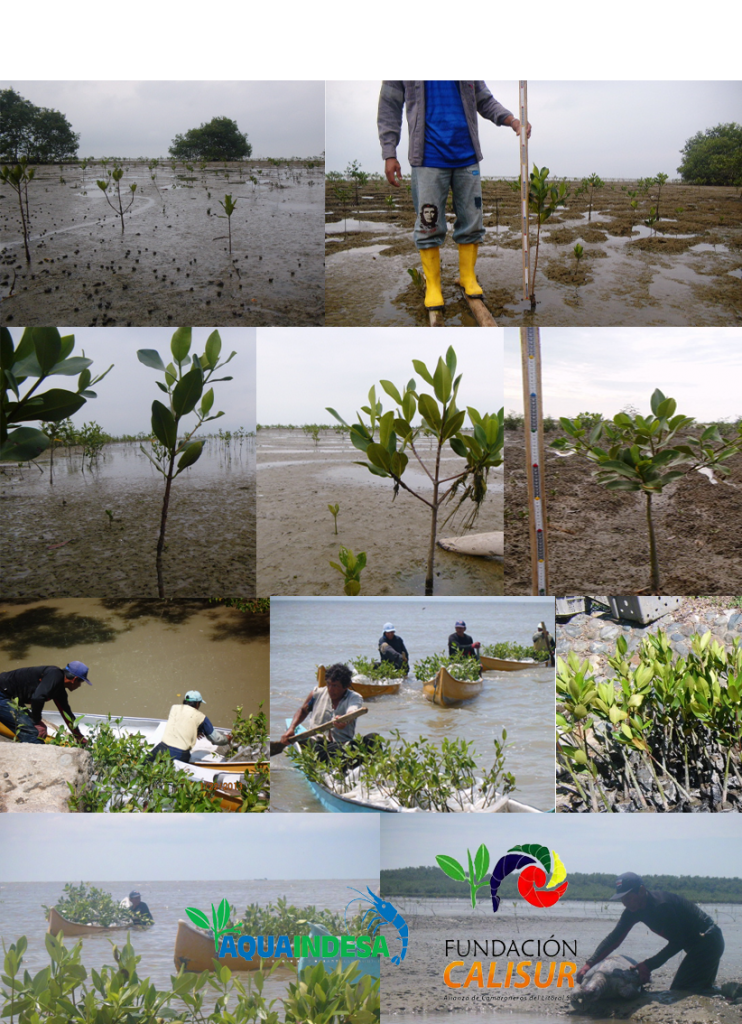 Collage004-3feb2013