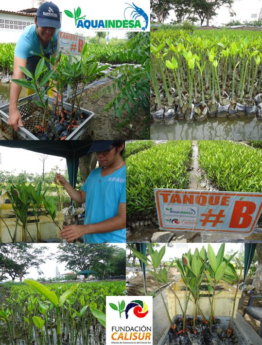 Monitoreo Plantas Vivero 23 abril