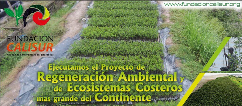 Completamos siembra de 1600 hectáreas con mangle rojo